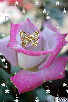 Красивые живые цветы gif.