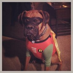 My boy;) I'm pretty sure he hates me now! Super boxer!