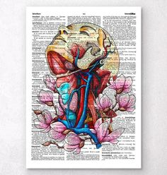 Head, neck and arteries - Dictionary page - Codex Anatomicus
