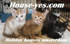 Budget Holiday houses in Amsterdam for 2 persons,for 4 persons,for 6 persons,for 8 persons Italy Holidays, House, Animals, Amsterdam Holland, Homes, Stockings, Vacation, Animales, Home