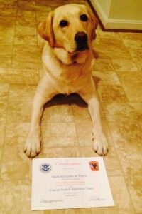 #Dog training #Washington DC - Week Board and Train Program is a very popular program and is usually booked for a few months in advance, so please contact us before paying online or trying to schedule an appointment for this.