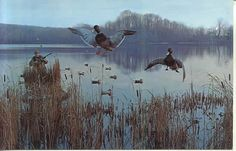 duck hunting | Playle's: 45487 Man Hunting Duck Ducks Hunt Postcard - Store Item ...