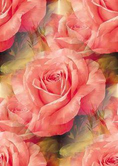 ZOOM DISEÑO Y FOTOGRAFIA: flores