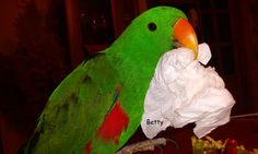 étrend Auckland, Parrot, Bird, Animals, Parrot Bird, Animales, Animaux, Birds, Animal