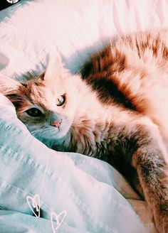 Better recognize cancer tumors with artificial intelligence from the cloud – Life Plus 365 Crazy Cat Lady, Crazy Cats, Derpy Cats, Nebelung Cat, Animals And Pets, Cute Animals, Gatos Cats, Orange Cats, Cute Cats And Kittens