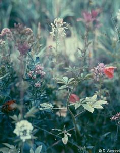 L'Oiseau Dans l'Espace - Fullmoon, Darren Almond's nocturnal nature series...