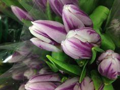 Lavender tulips