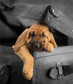 Pronto pra viajar !!!!
