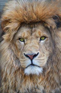 435 Meilleures Images Du Tableau Tattoo Animaux En 2019 Animals