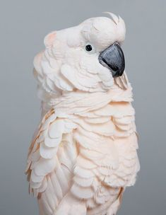 Cyril Moluccan cockatoo by Leila Jeffreys. Photographer Captures the Beauty of Colorful Birds in a Series of Portraits Exotic Birds, Colorful Birds, Georg Christoph Lichtenberg, Colossal Art, Big Bird, Cute Birds, Parakeet, Bird Art, Bird Feathers