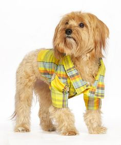 Another great find on #zulily! Yellow & Blue Madras Pet Shirt by Pet Life #zulilyfinds