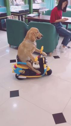 He just passed the driving test🤣🤣 - Katzen Baby Animals Super Cute, Cute Baby Dogs, Cute Funny Dogs, Cute Little Animals, Cute Funny Animals, Cute Puppies, Funny Dog Faces, Cute Animal Videos, Cute Animal Pictures
