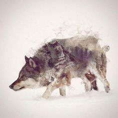 Double exposure with animals and their natural habitats. I WANT THIS ON MY BODY.