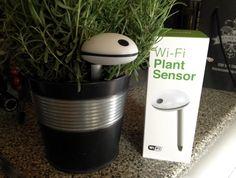 TNW review: The Koubachi WiFi Plant Sensor gives your plants an online voice