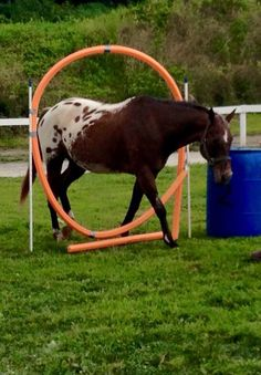 Homemade horse harness discuss home made simple harness for Things you can make with horseshoes
