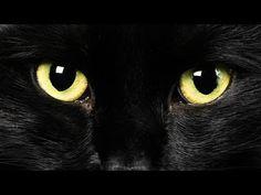 Operant conditioning- supersticious behaviors Bud Light - Superstitions TV 60 Sec - YouTube