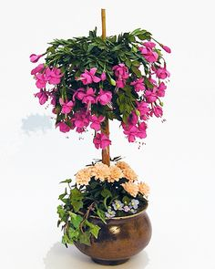 Potted Fuchsia Tree by Carol Wagner