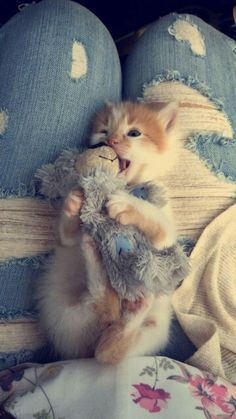 21 Cool Cat Facts To Share With Kids [AND PICTURES Here are 20 interesting cat facts they may not know, and can further immerse them in the feline world. Kittens Playing, Cute Cats And Kittens, I Love Cats, Crazy Cats, Cool Cats, Kittens Cutest, Pretty Cats, Beautiful Cats, Baby Animals