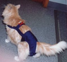 Piddle Pants™ For Cats Animal Protection, Veterinary Medicine, My Tumblr, Animal Rights, Animal Rescue, Kitty, Pets, How To Wear, Animals