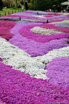 impresionante flores japon
