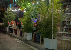 Christmas : A Festive walk in Athens Athens Greece, Greeks, Festive, Plants, Christmas, Country, City, Xmas, Rural Area
