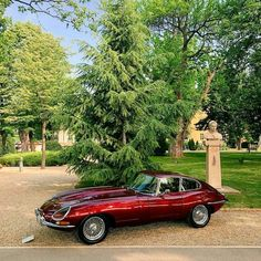 Jaguar E-type . Jaguar Sport, Jaguar Xk, Jaguar E Type, Jaguar Cars, Vintage Cars, Antique Cars, Jaguar Daimler, British Sports Cars, British Car