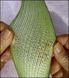 weaving a flax fantail step 32