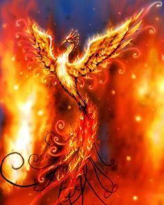 phoenix..... beautiful