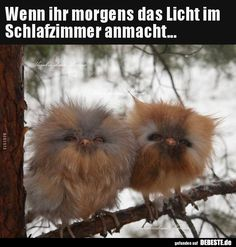 Northern Saw-whet Owls.What Cutties Owl Pictures, Pictures To Draw, Funny Pictures, Cute Baby Owl, Baby Owls, Animals And Pets, Funny Animals, Cute Animals, Saw Whet Owl