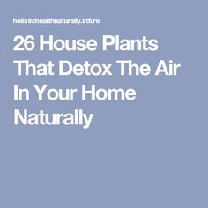 26 House Plants That Detox The Air In Your Home Naturally