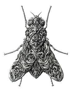 Incredibly Intricate Renaissance-Style Insect Drawings by Alex Konahin | Bored Panda