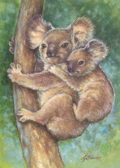 Lynn Bonnette Koala