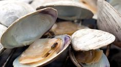Steamed clams, Clams and Butter on Pinterest