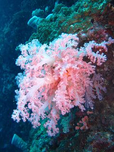 ˚Soft Coral