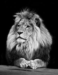 """""""Meu Deus não está morto. Ele certamente está vivo, dentro de mim! Rugindo como um leão!"""""""