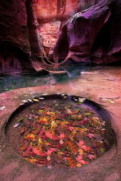 Zion National Park, The Subway by kevin mcneal, via Flickr
