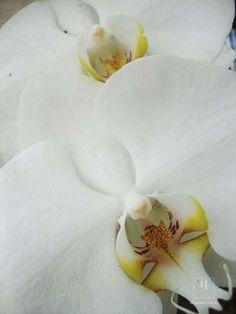 """1/5  Série: Na natureza.  impressão fotográfica em MDF.  Peça esteve na Exposição: """"Des-generando"""" em 2011, no Espaço Gambalaia. Possui marcas de exposição.    fotografia, isabel, flores, sensualidade, erótico   R$189,90"""