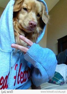 Yo dog!