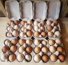 Bio, Tour, Fresh Egg, Urban Farming, Backyard Farming