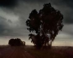 From Aperture Foundation, Todd Hido, Archival Pigment Print, 16 × 20 in Photography Workshops, Film Photography, Landscape Photography, Aperture Foundation, Todd Hido, San Francisco Museums, Luminous Colours, Whitney Museum, Tree Silhouette