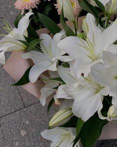 Flowers Nature, My Flower, White Flowers, Beautiful Flowers, Luxury Flowers, No Rain, Flower Aesthetic, Planting Flowers, Flower Arrangements
