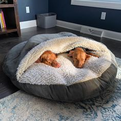 The Cozy Cave Dog Bed is perfect for nervous or chill-prone dogs that need a calming and warm dog bed bed to help improve their rest. Cozy Cave Dog Bed, Dog Cave, Diy Dog Bed, Homemade Pet Beds, Animal Room, Cute Dog Beds, Cute Dogs, Puppy Beds, Best Dog Beds