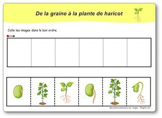 6 images séquentielles : de la graine à la plante de haricot Mother's Day Activities, Preschool Learning Activities, Classroom Activities, Alternative Education, Jack And The Beanstalk, Science Worksheets, Diy Projects For Beginners, Forest School, Ms Gs