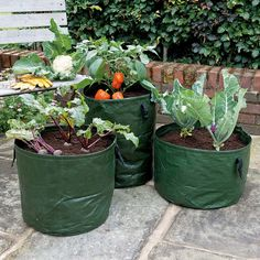A Set Of Three Planters For Growing A Variety Of Vegetables Salads And Herbs