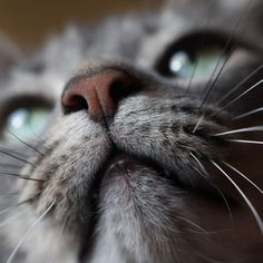 30+ Close-Ups Of Cat Noses To Make Your Day