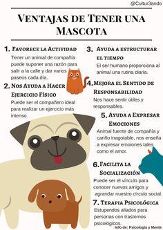 Love Pet, I Love Dogs, Neko Cat, Veterinary Medicine, Mundo Animal, Pet Life, Animal House, Funny Animal Videos, Baby Dogs
