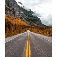 Slow clap.  #Alberta #autumndays : @jordanherschel via @travelalberta  You never know what waits for you around the next corner. Except in the Canadian Rockies where it's probably a bear.      #exploremore #exploretocreate #keepitwild#wildernessculture #flashesofdelight #explorealberta#neverstopexploring #stayandwander #morningslikethese#quietthechaos #seekthesimplicity #modernvoyage#wunderlust #adventureinspired #themountainsarecalling#WanderlustWednesday  #Nature #Outdoors #Forest…