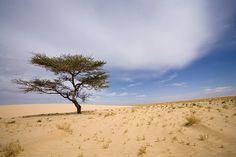 Mauretanien Landschaft im Mauretanien Reiseführer http://www.abenteurer.net/2347-mauretanien-reisefuehrer/