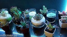 New DIY Terrarium Kit Glass Bowl Sand Rocks Plant Custom Lot ~ No Maintenance