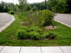 Parking Lot Swale.high-res by GLPF Staff, via Flickr